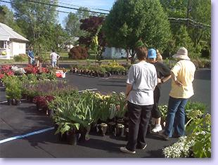 plant sale in parking lot